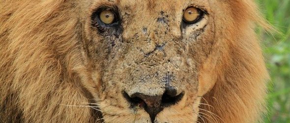 spiritual significance of scars