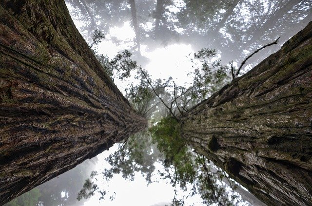 visiting the redwoods