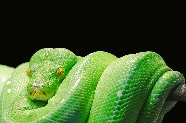 why do snakes get a bad rap